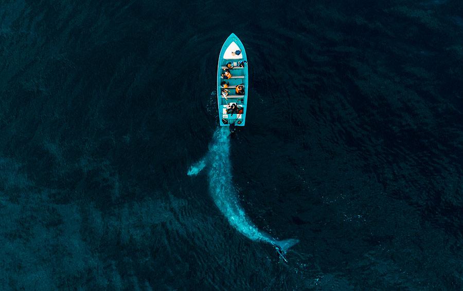 categoria fotografía con dron de